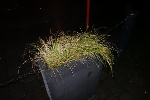 ADK_triestige planten_ (14)