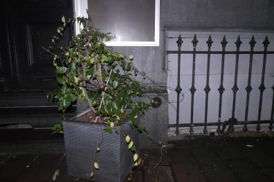 ADK_triestige planten_ (15)