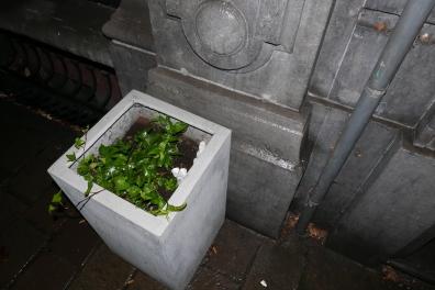 ADK_triestige planten_ (17)