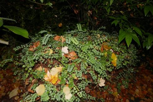 ADK_triestige planten_ (7)